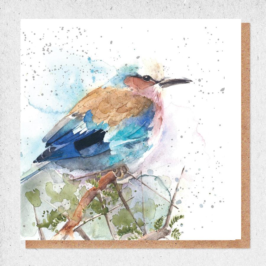 kingfisher card  amaranta